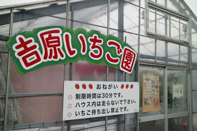 あま〜い♡Let'sいちご狩りin吉原いちご園